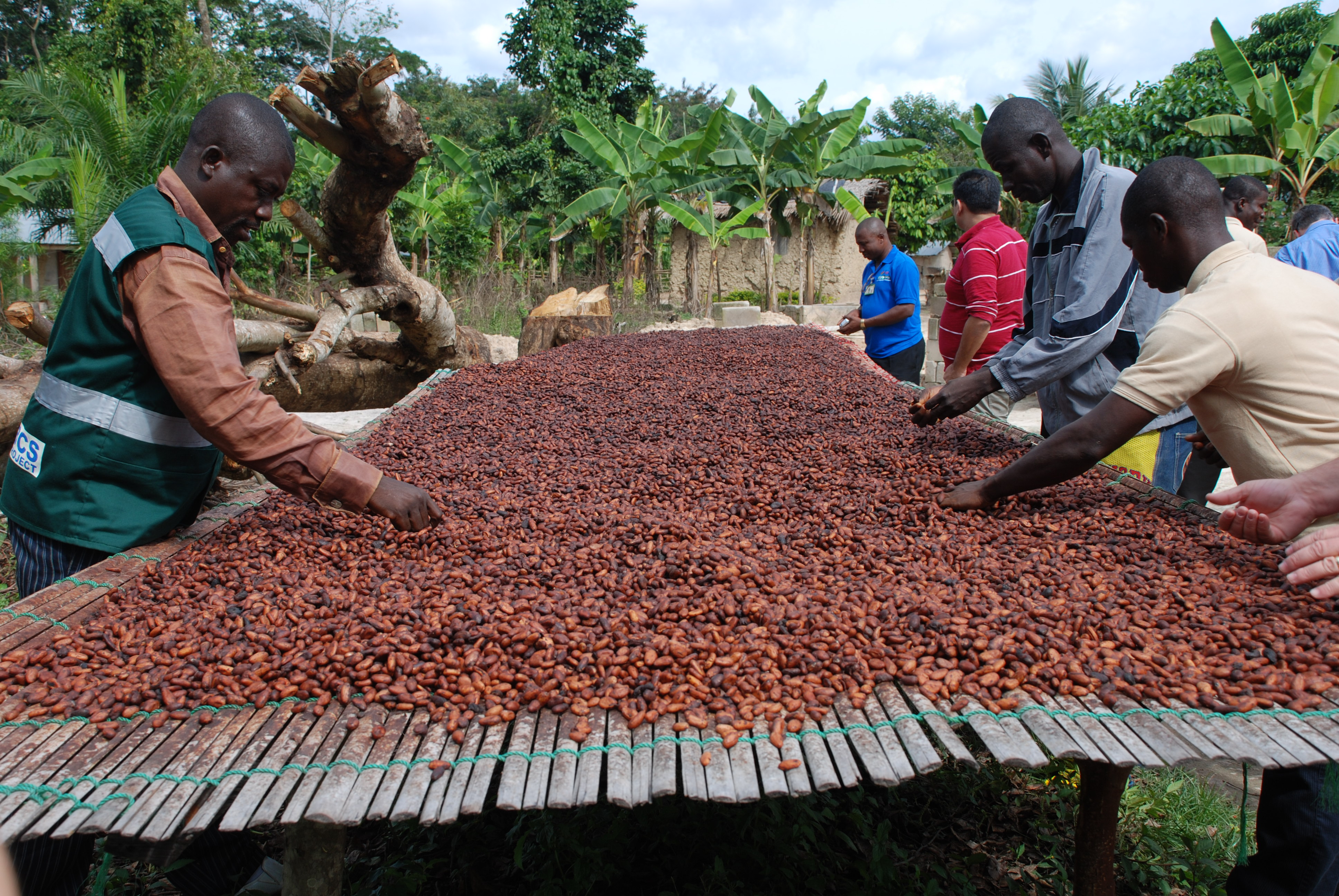 coco farming Cocoa farming presents one of the best business opportunity in agribusiness the demand for cocoa seeds worldwide is extremely high and the price in international.
