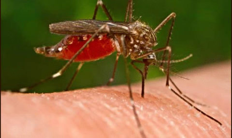 Malaria claims 48 lives in Sokoto – Official