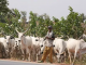 Anti-open grazing law: Islamic scholar kicks, says rule of law must be considered