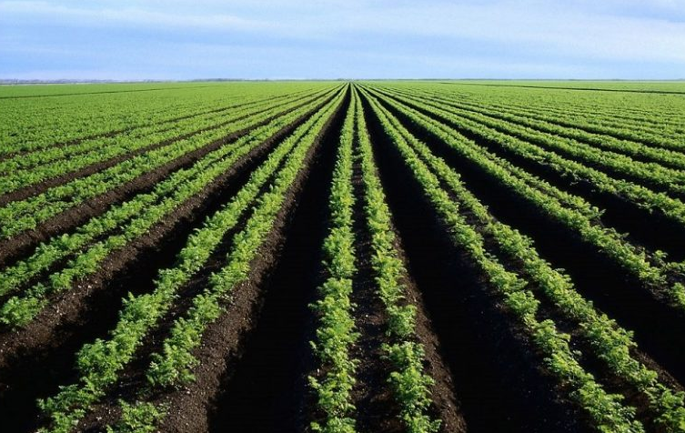 How Kenya's economy received big boost through Agriculture, Forestry and Fishing