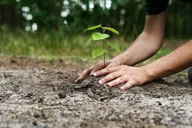 EU plants 4.5 million trees in Katsina
