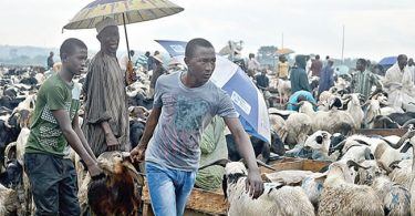WHO fears possible rise of COVID-19 infections during Sallah