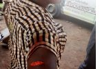 Oyo APC Chairman allegedly stabs woman leader