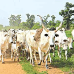 Council of State approves $1bn for agric, livestock support for herdsmen