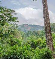 Enhancing Eco-Tourism Through National Parks